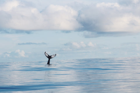 A whale's tail is seen on the surface of the ocean with clouds on the blue sky