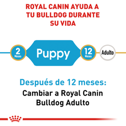 Royal Canin Bulldog Inglés Puppy - Cani Delights