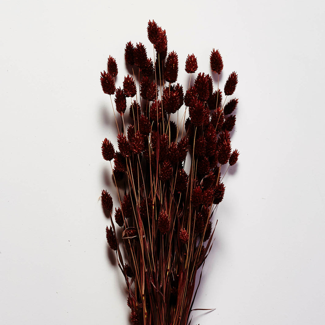 Dried Phalaris bunch, Brown