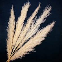 Load image into Gallery viewer, XXL Pampas Grass