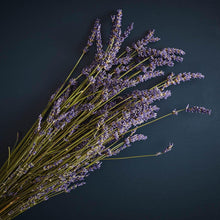 Load image into Gallery viewer, Dried Lavendar Bunch