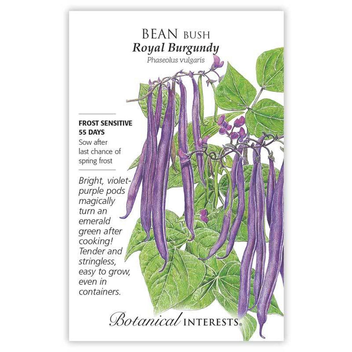 Botanical Interests, Bean, Royal Burgundy Bush Bean Seeds