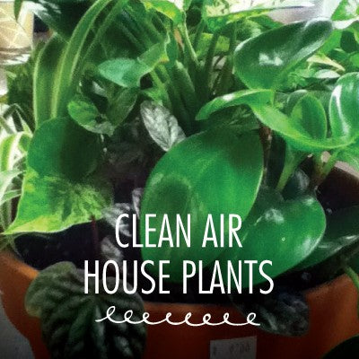 Houseplant, Clean Air Assorted 4""