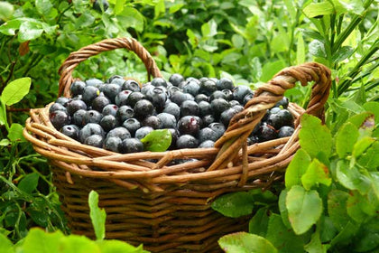 Bluberries 180 & 400 grams - spray free grown organically