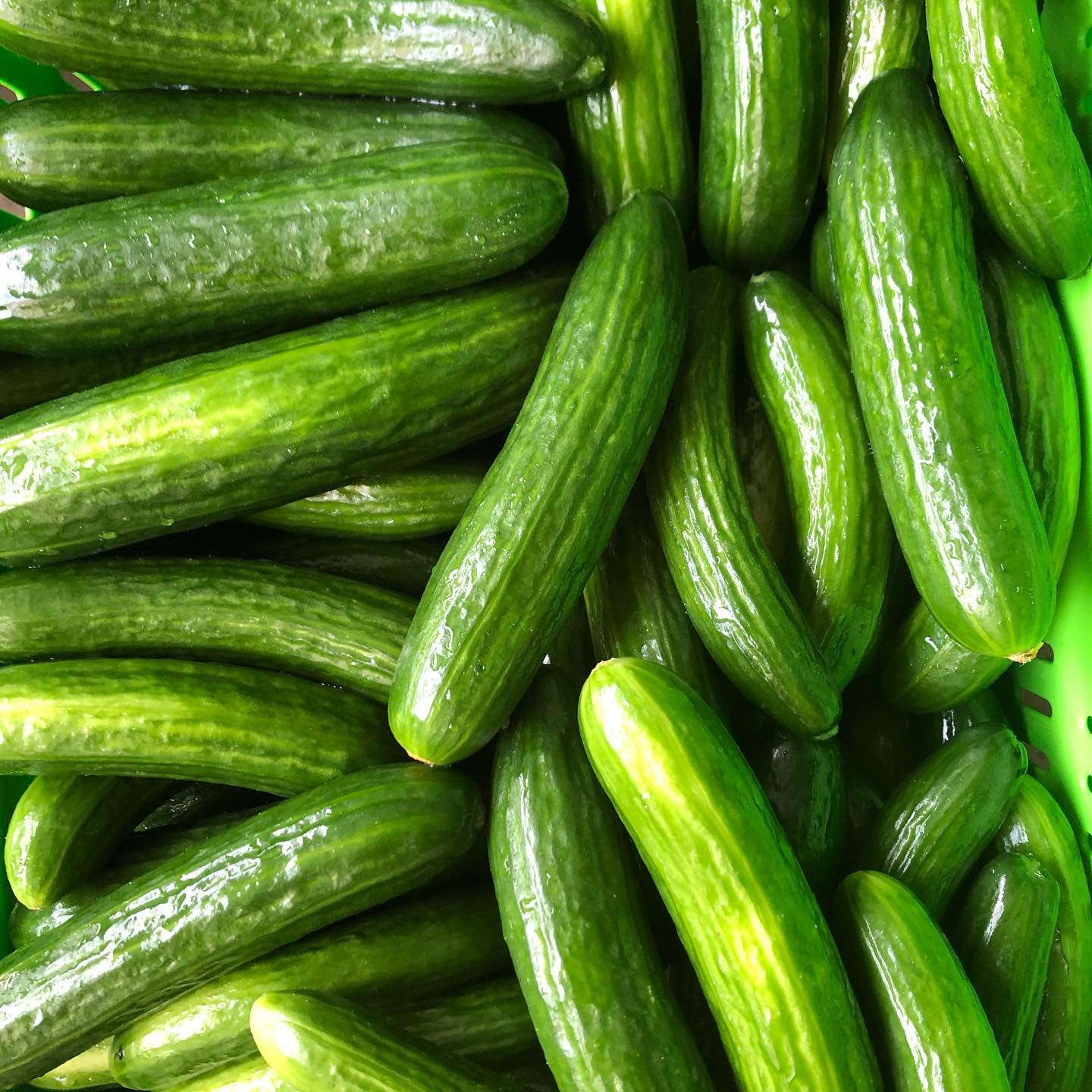 Organic Cucumber 500g - organically grown cucumbers