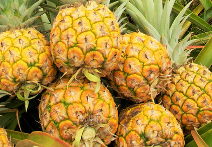 Pineapple -  Certified Organic Pineapples