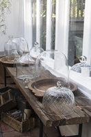 Glass Domes and Jars
