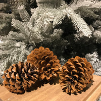 Natural Assorted Set of Three Large Pinecones