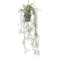 Faux Hanging Rhipsalis Plant In Pot 30cm | Annie Mo's