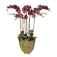 Damson Orchid Phalaenopsis Large Plants in Antiqued Gold Effect Pot | Annie Mo's