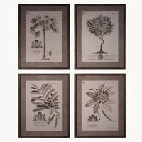 Set of Four Kew Gardens Botanical Framed Prints Each 70cm | Annie Mo's