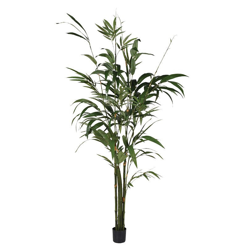 Large Green Bamboo Palm Tree In Small Black Plastic Pot | Annie Mo's