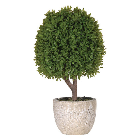 Green Miniature Boxwood Ball In Stone Effect Pot | Annie Mo's