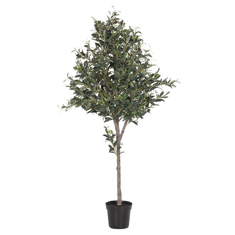 Natural Large Olive Topiary In Black Plastic Pot | Annie Mo's