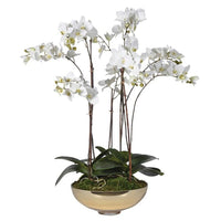 White Orchid Pretty Phalaenopsis Plants In Shallow Glass Vase | Annie Mo's