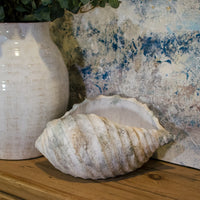 White Terracotta Shell Decoration 40cm | Annie Mo's