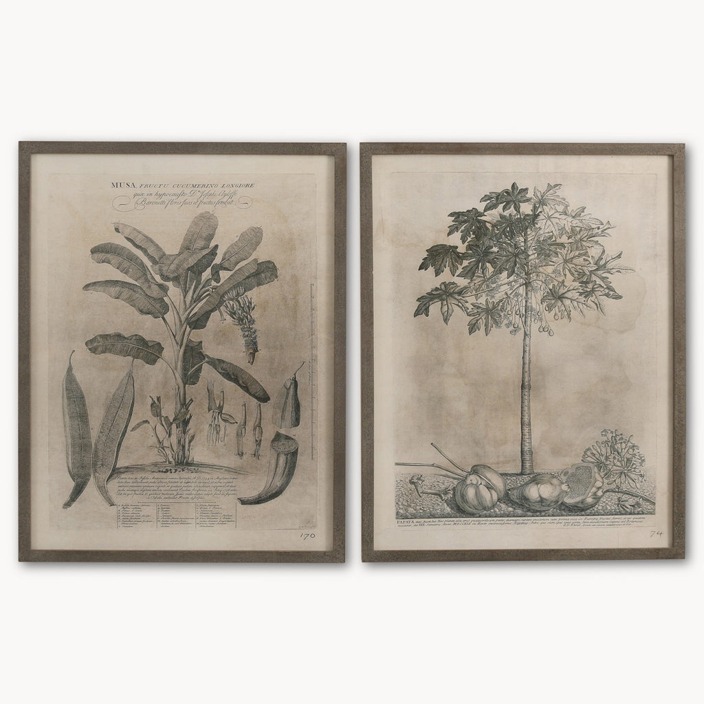 Brockby Set of Two Papaya  Wooden Framed Wall Art | Annie Mo's