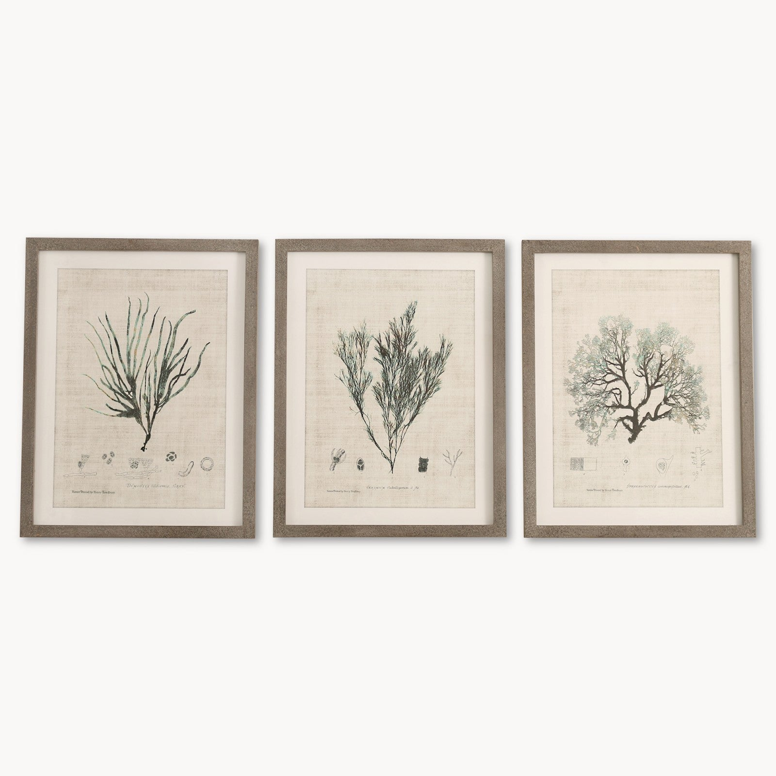 sc 1 st  Annie Mou0027s & Brockby Set of Three Wooden Framed Botanical Wall Art | Annie Mou0027s