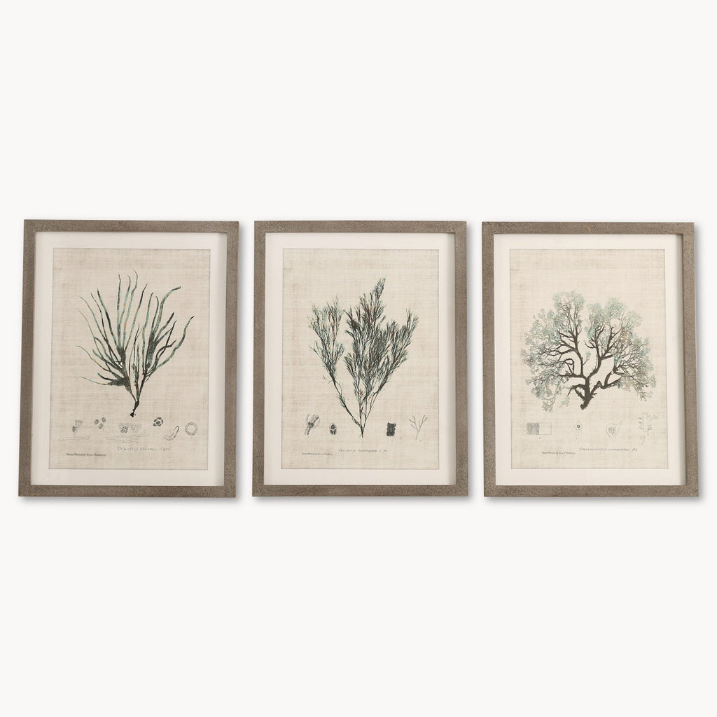Brockby Set of Three Wooden Framed Botanical Wall Art | Annie Mo's