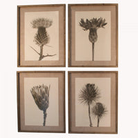 Set of Four Framed Poppy Monochrome Prints 70cm | Annie Mo's