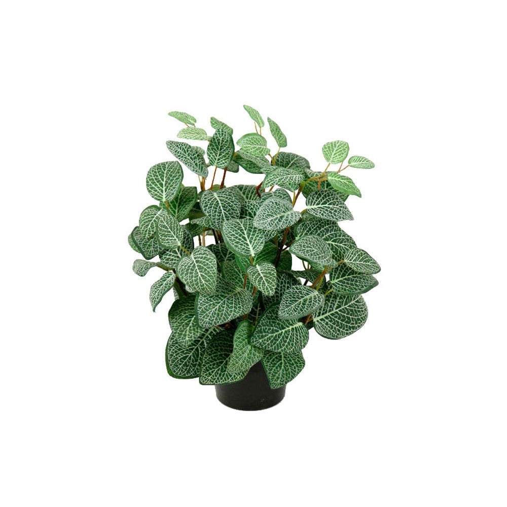 Fittonia in a Pot | Annie Mo's