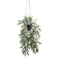 Stag Fern in Pot Hanging 35cm | Annie Mo's
