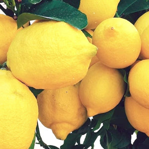 Lemon Extract Ingredient