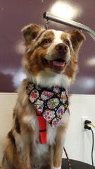 Dog Grooming Bath and Brush Service Woodland Hills Groomers