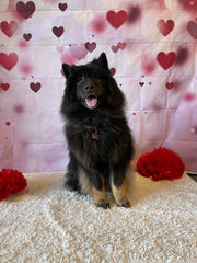 Chow Dog Grooming Doggie Daycare Dog Hotel pet spa The Pampered Pet Hotel and Grooming Spa