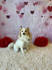 The Pampered Pet Hotel and Grooming Spa Dog Grooming Doggie Daycare Dog Hotel Best Pet Services Near Me