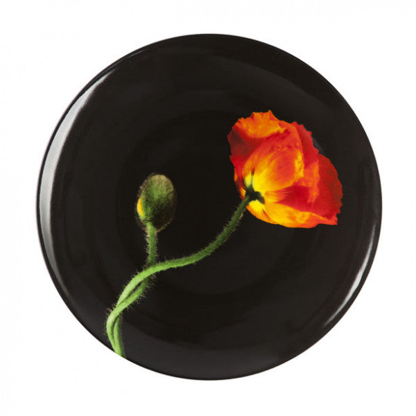 "Mapplethorpe ""Orange Poppy"""