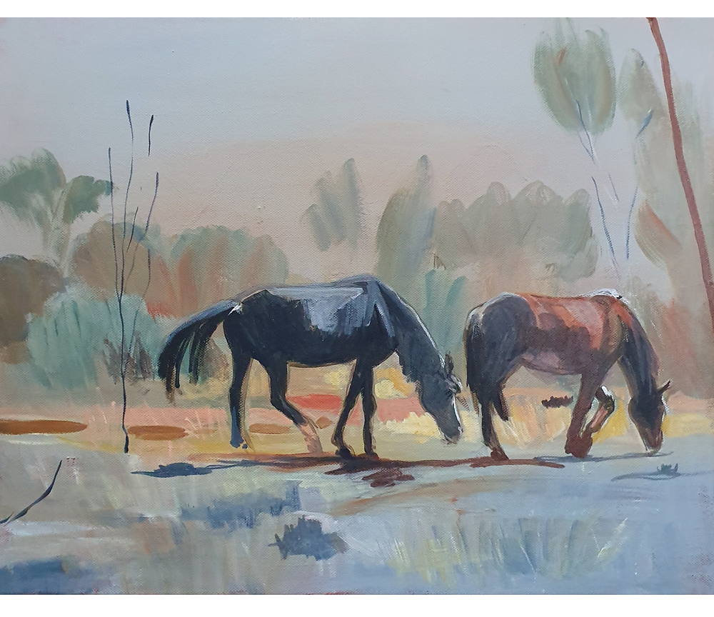 Roadside Brumbies