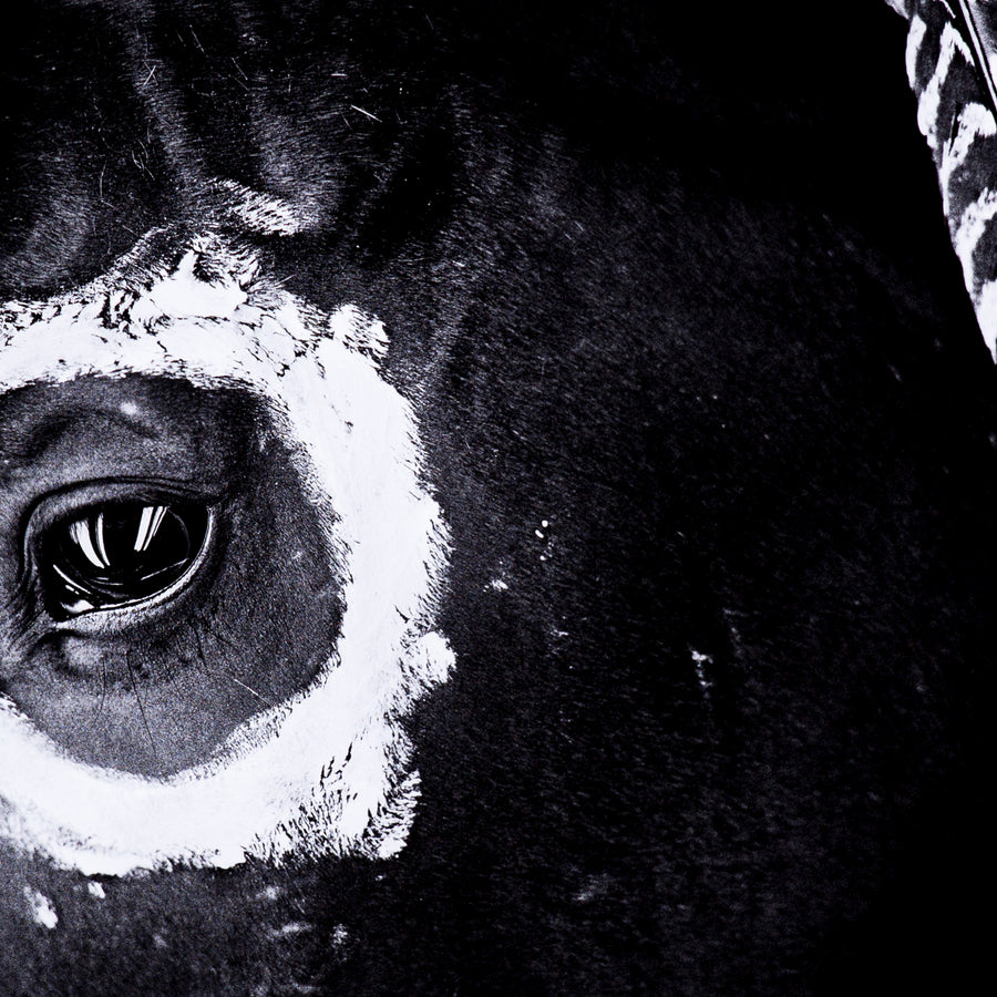 War Horse, Close Up