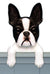 Boston Terrier Dog Door Topper Black
