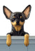 Chihuahua Dog Door Topper Black
