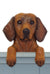 Dachshund Smooth Dog Door Topper Black and Tan