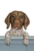 German Shorthaired Pointer Dog Door Topper