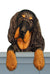 Gordon Setter Dog Door Topper