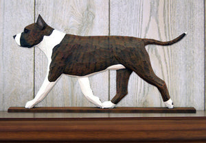 American Staffordshire Terrier Dog in Gait Topper Brindle and White