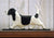 Basset Hound Dog in Gait Topper Black and White