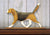Beagle Dog in Gait Topper Tri color