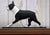 Boston Terrier Dog in Gait Topper Black