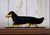 Dachshund Long Hair Dog in Gait Topper Black and Tan