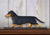 Dachshund Smooth Dog in Gait Topper Black and Tan