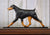 Doberman Natural Dog in Gait Topper Black and Tan