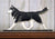 Siberian Husky Dog in Gait Topper Black and White
