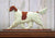 Irish Red and White Setter Dog in Gait Topper