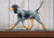 Bluetick Coonhound Dog in Gait Topper