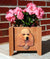 Poodle Dog Planter Box Apricot