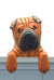 Shar Pei Dog Door Topper Red
